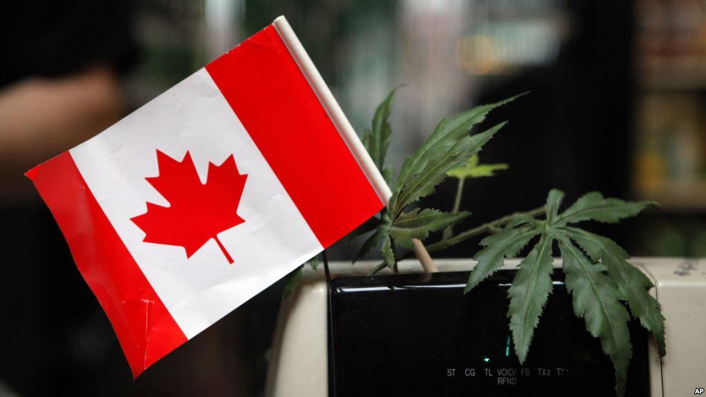 La marihuana será legal en Canadá desde este miércoles