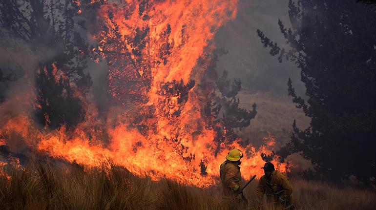 Bomberos registran 31 incendios forestales en La Paz sólo en el mes de agosto