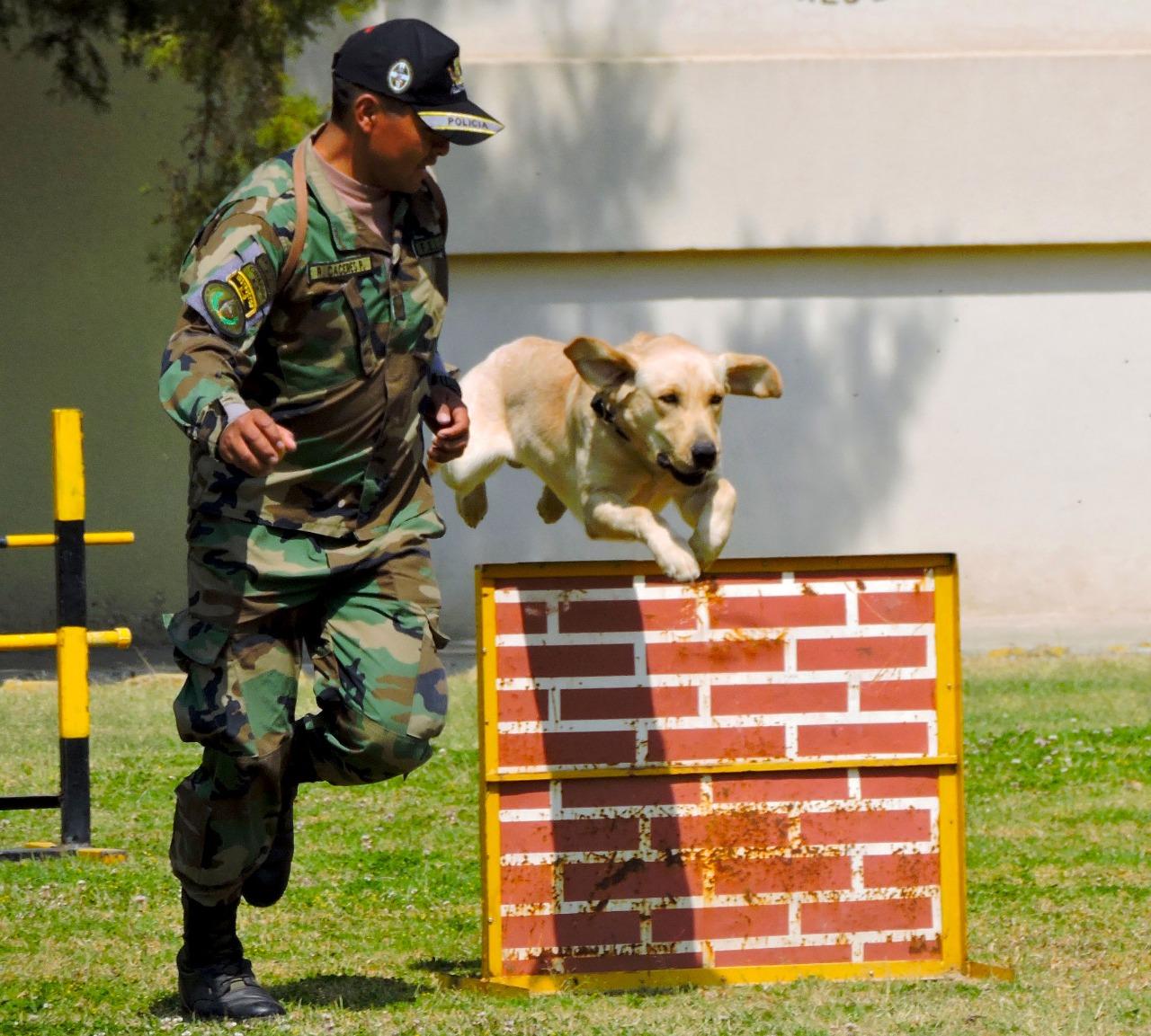 FELCN homenajeará a canes antidroga por trabajar a favor del país