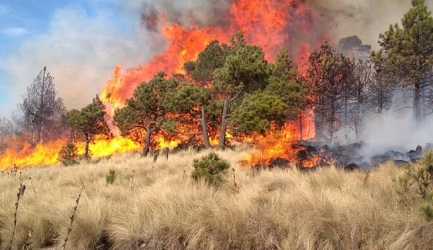 Activistas ambientales pedirán la anulación de leyes para la producción de etanol y biodiesel por el incendio en Santa Cruz