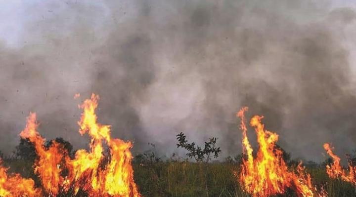 CEDLA solicita la abrogación de las normativas que permiten el desmonte de bosques por ser aprobadas sin análisis previo