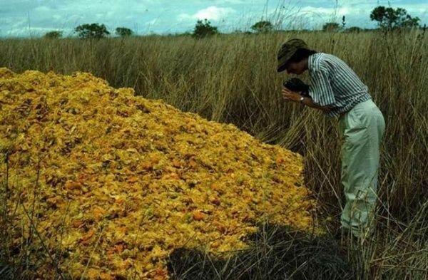 12.000 toneladas de desperdicios de naranja revivieron un bosque en Costa Rica