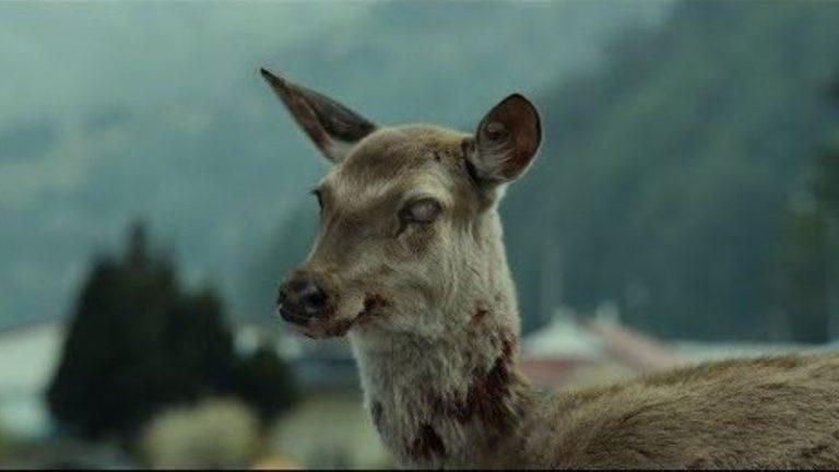 """Nevada alerta a cazadores por enfermedad de venados """"zombies"""""""