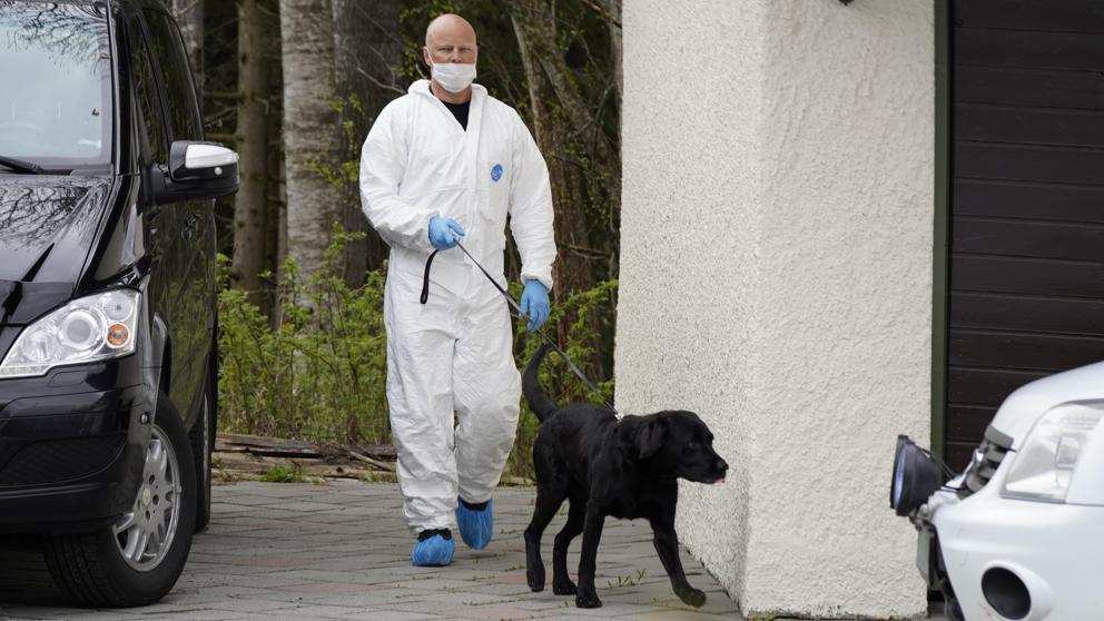 Reino Unido pretende entrenar perros para detectar coronavirus