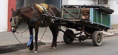 Alcaldía de Santa Cruz prohíbe el uso de carrozas jaladas por caballos