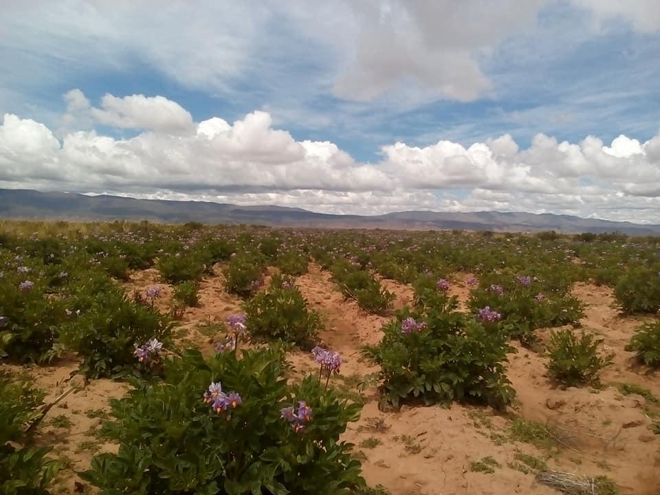 Pobladores de Caracollo realizarán un bloqueo para denunciar que Ecebol está contaminando los sembradíos y el agua