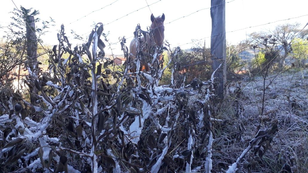 Fuertes heladas en Pailón ocasionan daños en los cultivos