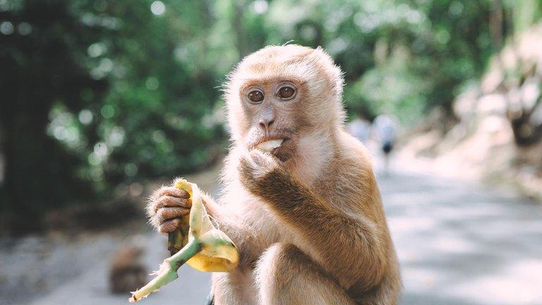 China reporta la primera muerte de un humano infectado por un virus que se transmite entre monos