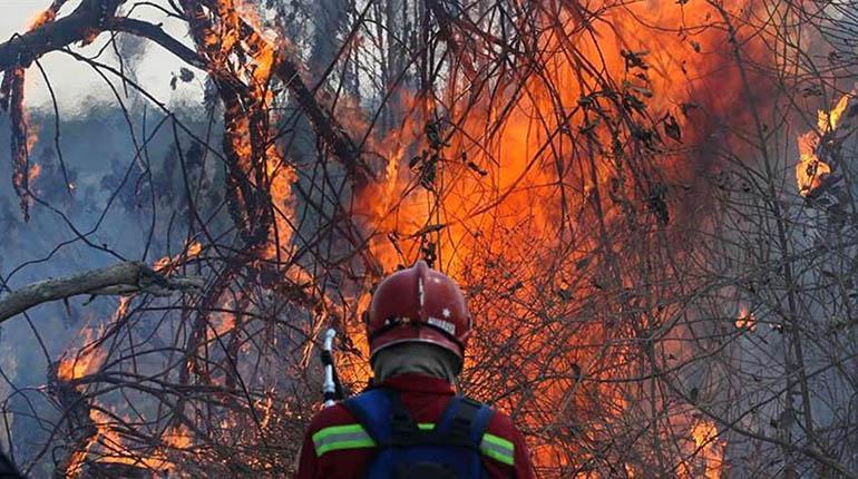 Los incendios arrasan las 175 mil hectáreas y ya son incontrolables