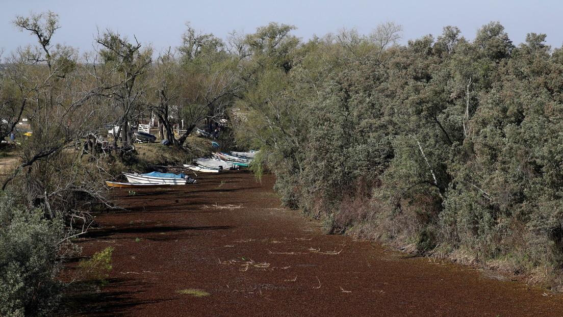 Sequía histórica en el río Paraná permite caminar desde Argentina a Paraguay