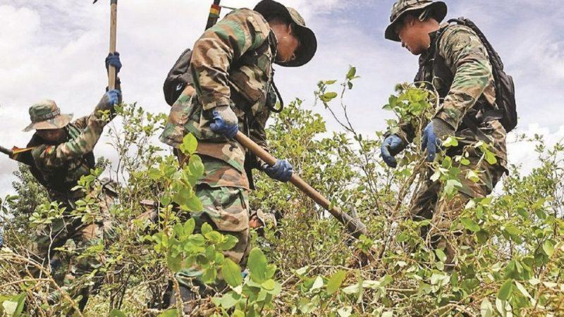 UNODC informó que el cultivo de la hoja de coca incrementó en un 15% y su erradicación en 76%