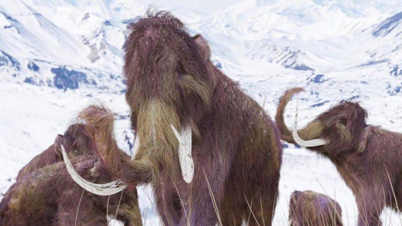Científicos recaudan 15 millones de dólares para revivir a los mamuts